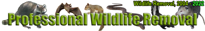 Wildlife Removal Macon