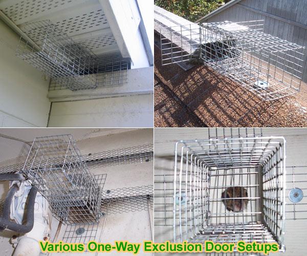 One Way Door Exclusion Funnel For Squirrels