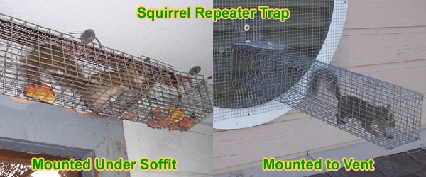 How To Keep Away Squirrels From House Yard Property